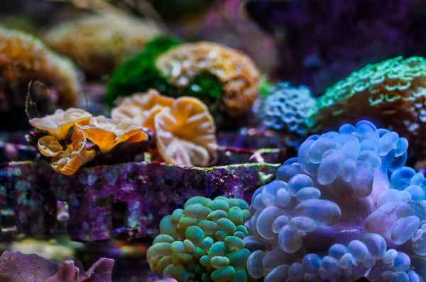 acquario marino nanoreef